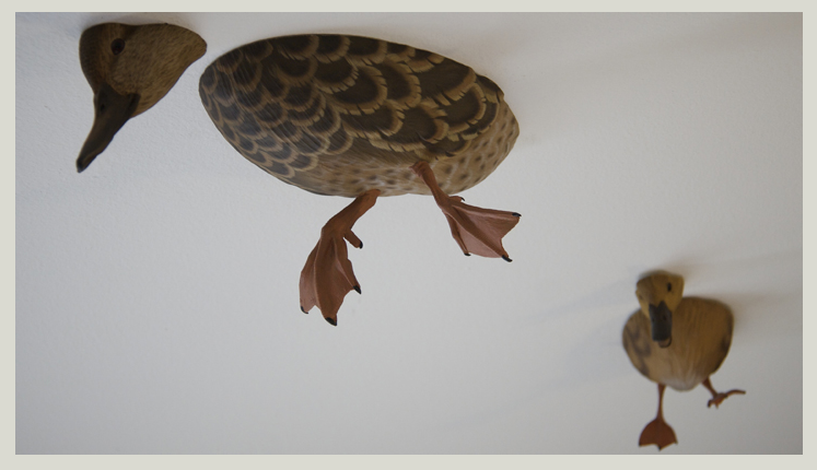 ceiling ducks