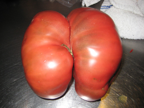 you say tomato, i say ass tomato