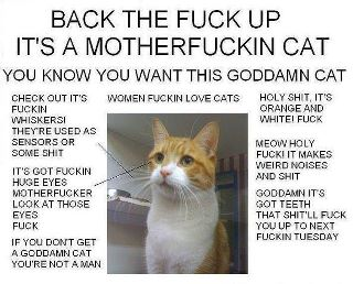 You can't fuck with this cat