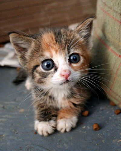 but ball scares me...here's a kitten.