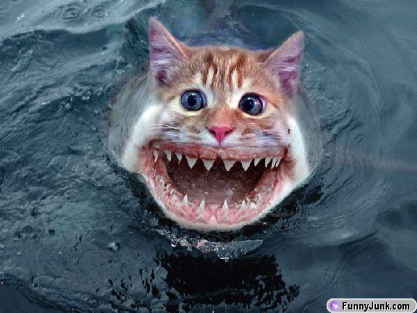 sharkcat
