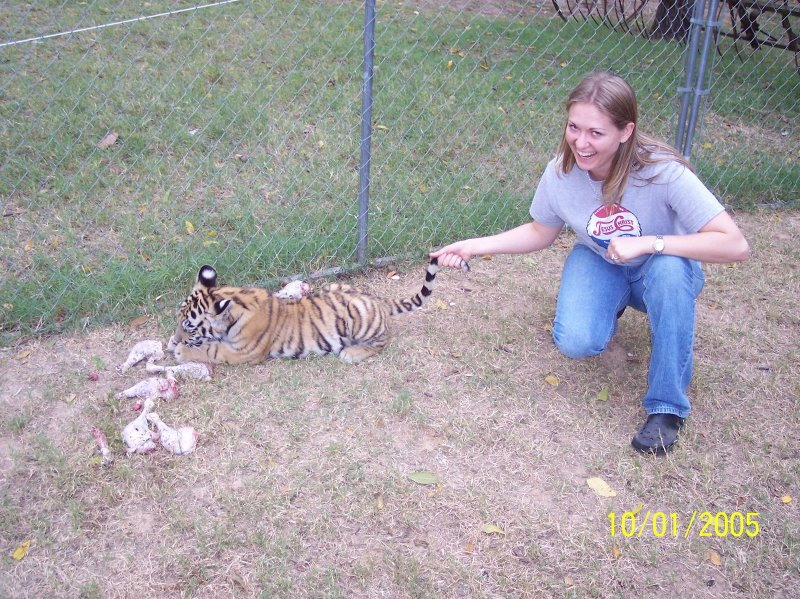 i got a tiger by the tail