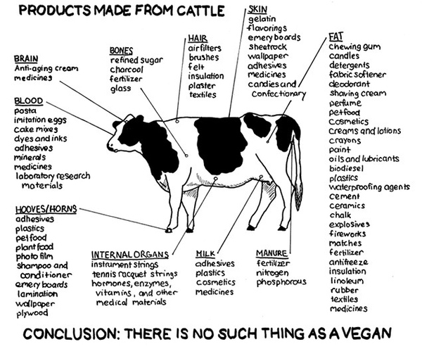 there's no such thing as vegan