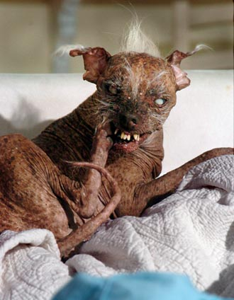 ugliest dog on the planet...seriously..someone kill it now!