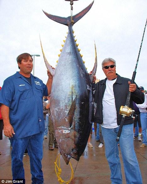 new world record tuna